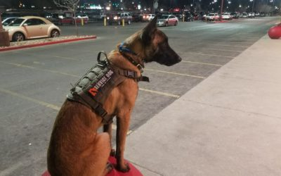 Just what can a service dog do?